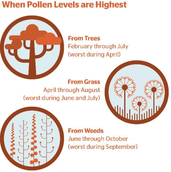 allergy_blog